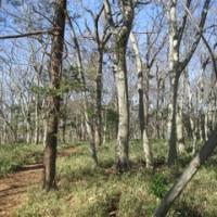 真冬の雑木林