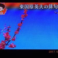 1/21 夏井先生 紅梅と飛行機
