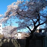 春本番!~入学式、始業式を前に~