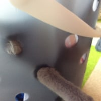 ひなたぼっこしながら遊ぶ。