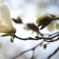 親水公園の春