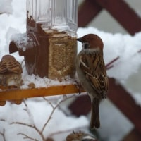 冬季限定で餌箱を設置してあげました。
