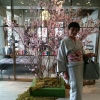 0324 ヘアカット&桜