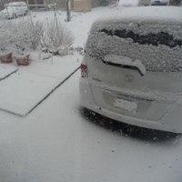 170413 今朝は雪(吹雪)