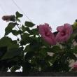 帰り道、今日の花