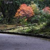 8日の散歩 ( 妙蓮寺から船岡山、十二坊への散歩で初冬探し )