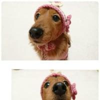 嬉しい~ピンクのどんぐり帽子が届いたよ!