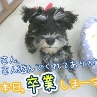 祝!!卒業式☆ひかる改め・・・ひかる!?