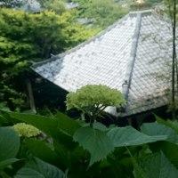 ずいぶん早いけど長谷寺に行きました!