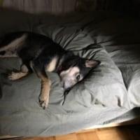誰のベッドだ。