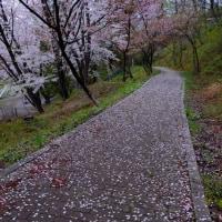 若木山(おさなぎやま)