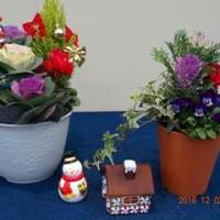 新津の園芸店へ花を見に行く