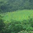 65 清滝バス停から首無地蔵を経て竜ケ岳 2017.07.25