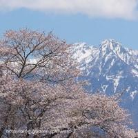 桜と八ヶ岳
