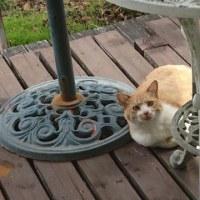 野良猫ちゃんが我が家のようにリラックス(^-^)