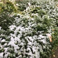 東京  初雪