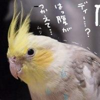 日本のABCの日(10月28日)