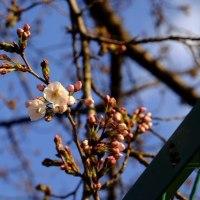 肌寒いが日差しは、春ですね。