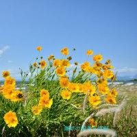 琵琶湖湖岸の風景は