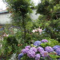 梅雨空の庭