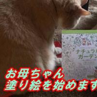コロリアージュに猫ズが興味津々♪【猫日記こむぎ&だいず】2017.03.18