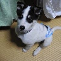 ★ 吾輩は「犬」である=福島被災地に生まれて