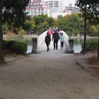 水と緑のオアシス 大濠公園(中之島) 9