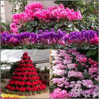 image2292 温室の花3