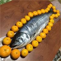 ★魚の周りでミカンが笑う 🐟 🍊