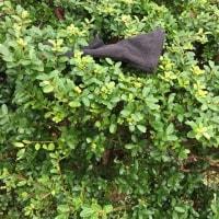 日乗 diary - 落としモノ 手袋65 lost glove65