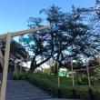 風がつくる夏景色     ガーデンテラス紀尾井町