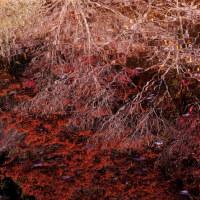 いつもぎりぎり、お歳暮・・池に映った紅葉