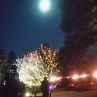 水戸偕楽園、夜の観梅