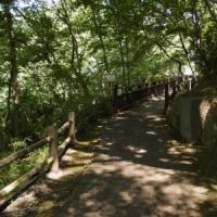 初夏の早野聖地公園 七つ池巡り