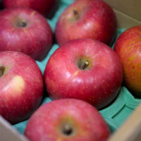 りんごをいただきました^^