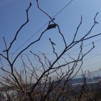 春一番 風が茶色だ➰➰➰