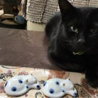 猫たちの血液検査の結果