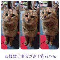 太郎か~ちゃんさん