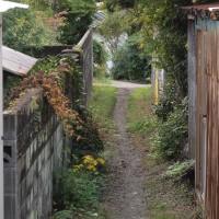 私の散歩道