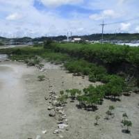 沖縄の風景 うるま市 6月