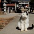 埼玉県の神社猫 2017年1月 その2