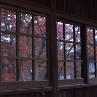 本土寺のモミジ
