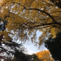 新宿御苑 パウワウ