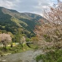 大原 高野川散歩