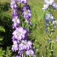5月~6月の花