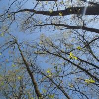 風の丘・春の風まつり 2016