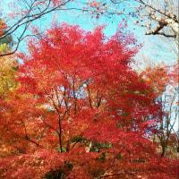 京都散策 (´ω`*)