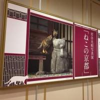 【art】岩合光昭写真展 「ねこの京都」
