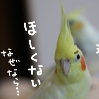 日照権の日(6月27日)