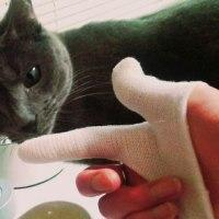 犬猫歯磨き&お米在庫無い朝は・・・